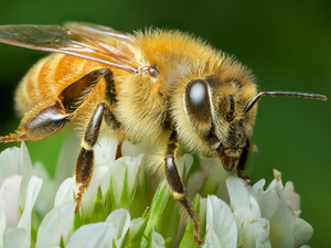 Square bee