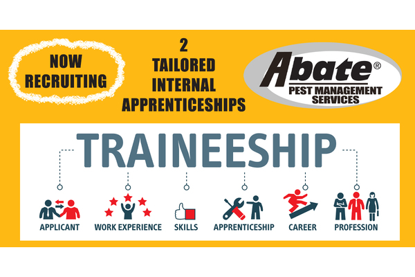 Big sq tailored internal apprenticeship