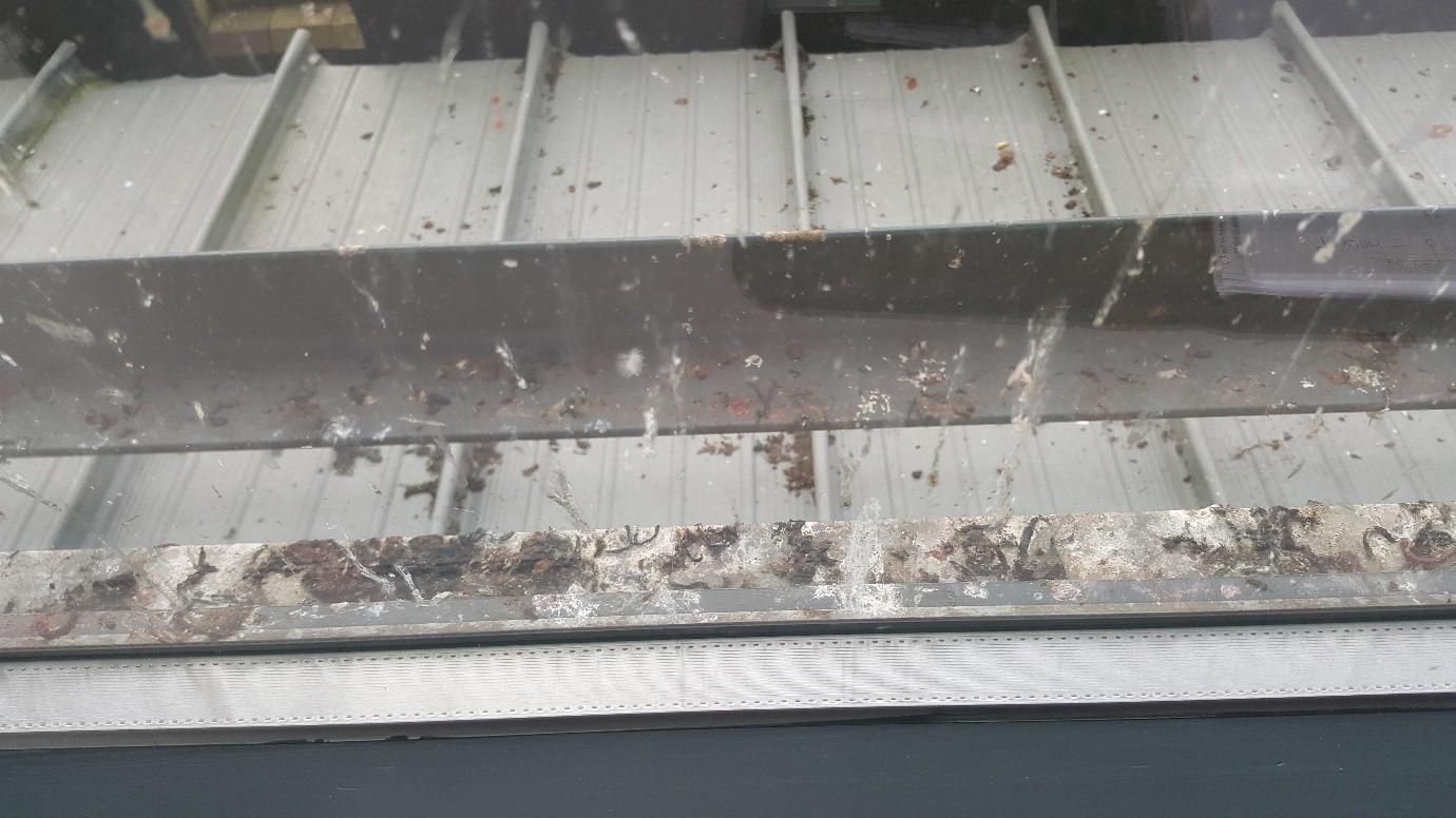 bird proofing in cambridge
