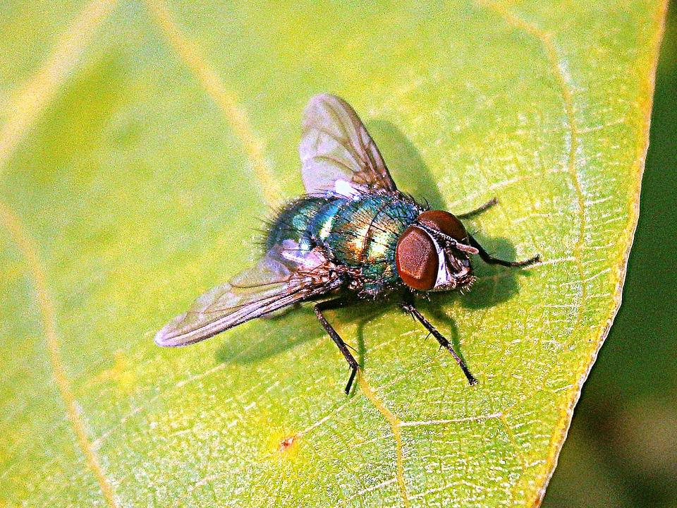 fly treatment Norfolk